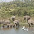 Special Publication: The Story of Asia&#8217;s Elephants
