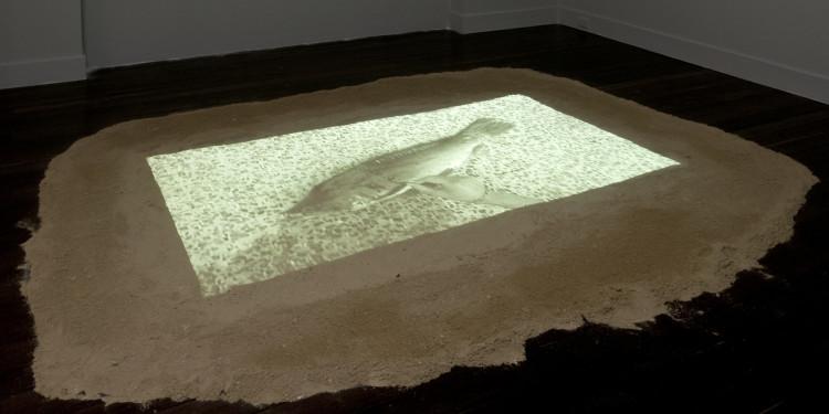TSAI Charwei (CAJ Csia-vej): Hal-projekt. 2008. Változó méret. Videoinstalláció. A művész tulajdona. / TSAI Charwei: Fish Project. 2008. Dimension variable. Video installation. Courtesy of the artist.