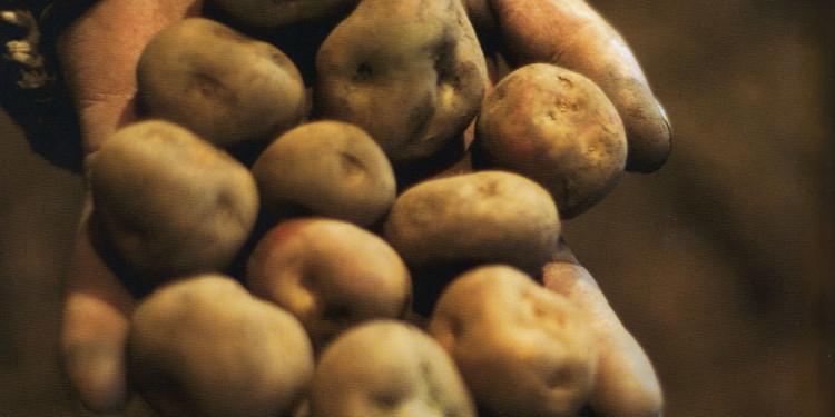 Patate...la terra produce poco d'altro