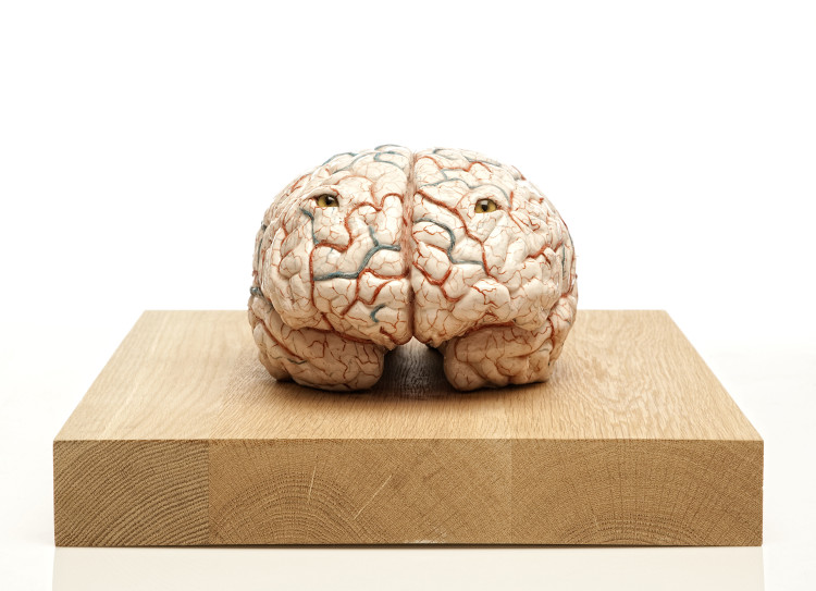 Jan Fabre, The brain of a killer, 2011 ,silicone, peinture et verre, base en bois, 32,4 x 25 x 18 cm Courtesy Galerie Daniel Templon, Paris , Photo : Pat Verbruggen, ©Angelos