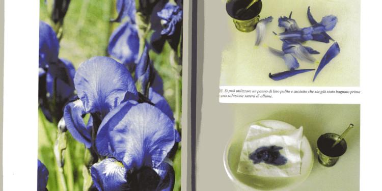 pag. 252 fiori di Giaggiolo - pag. 253 procedimento colore