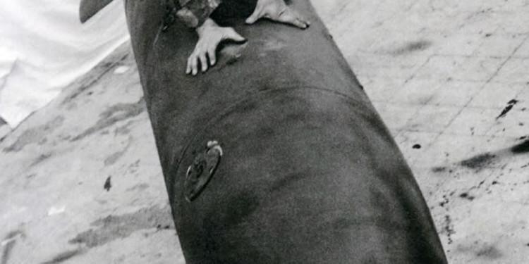 Claudio Abate, Colomba della pace, 1965 Stampa fotografica lambda B/N cm 50 x 36,5 ognuna - trittico cm 50 x 110 Collezione Fondazione Museo Pino Pascali