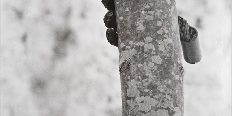 Giuseppe Penone Alpi Marittime. Continuerà a crescere tranne che in quel punto 2 fotografie B/N / 2 B/W photographs 58 x 39 cm ognuna / each MAMbo – Museo d'Arte Moderna di Bologna Fotografia dell'opera realizzata per il Catalogo del Patrimonio Culturale dell'Emilia Romagna / Photograph of this work has been taken for Emilia Romagna Cultural Heritage Catalogue: www.ibc.regione.emilia-romagna.it Photo© Mario Guglielmo