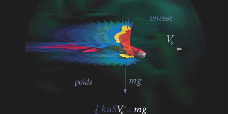 "Bird Flight (Bernoulli's principle) images from the film ""Mathematical paradises"", 2011. Artwork BUF"