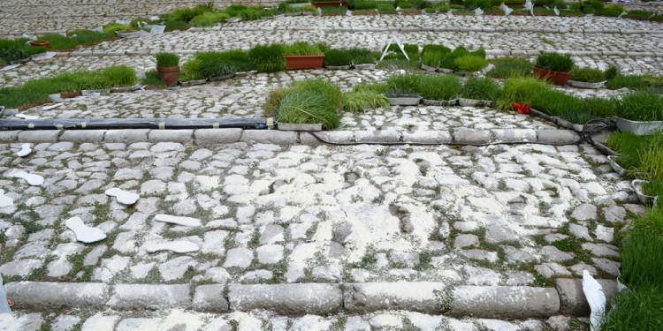 Progetto In Albis Scalinata di San Bernardino, L'Aquila - 4-5 Aprile 2012 - Foto di Rita Mele