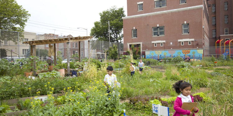 Edible Schoolyard New York City, WORKac Brooklyn, New York Photo Raymond Adams, courtesy WORKac