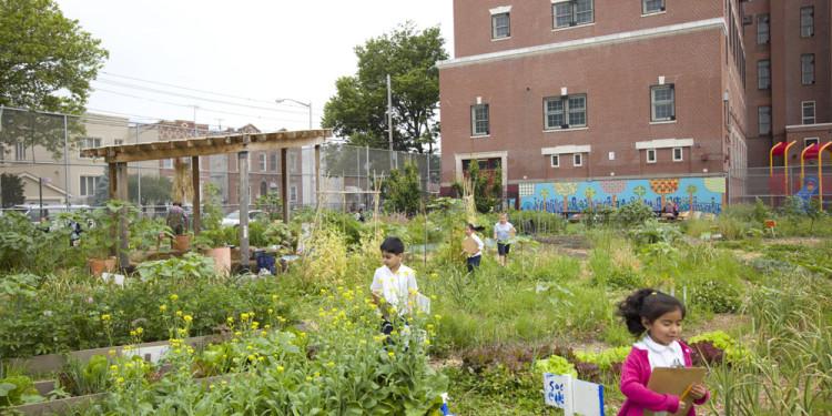 Edible Schoolyard New York City, WORKac Brooklyn, New York Photo Raymond Adams, courtesy WORKac