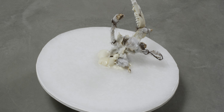 CRISTIANA PALANDRI, Oddity #2, 2008, cm 25 x 47 x 47, Bones, human hair, gauzes, feathers, wax, wood, iron