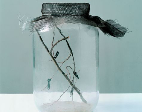 David Hammons Flies In A Jar, 1994 Glass Jar With Zippers And Plants Cm 25,4 × 15,2 × 15,2 © David Hammons François Pinault Foundation